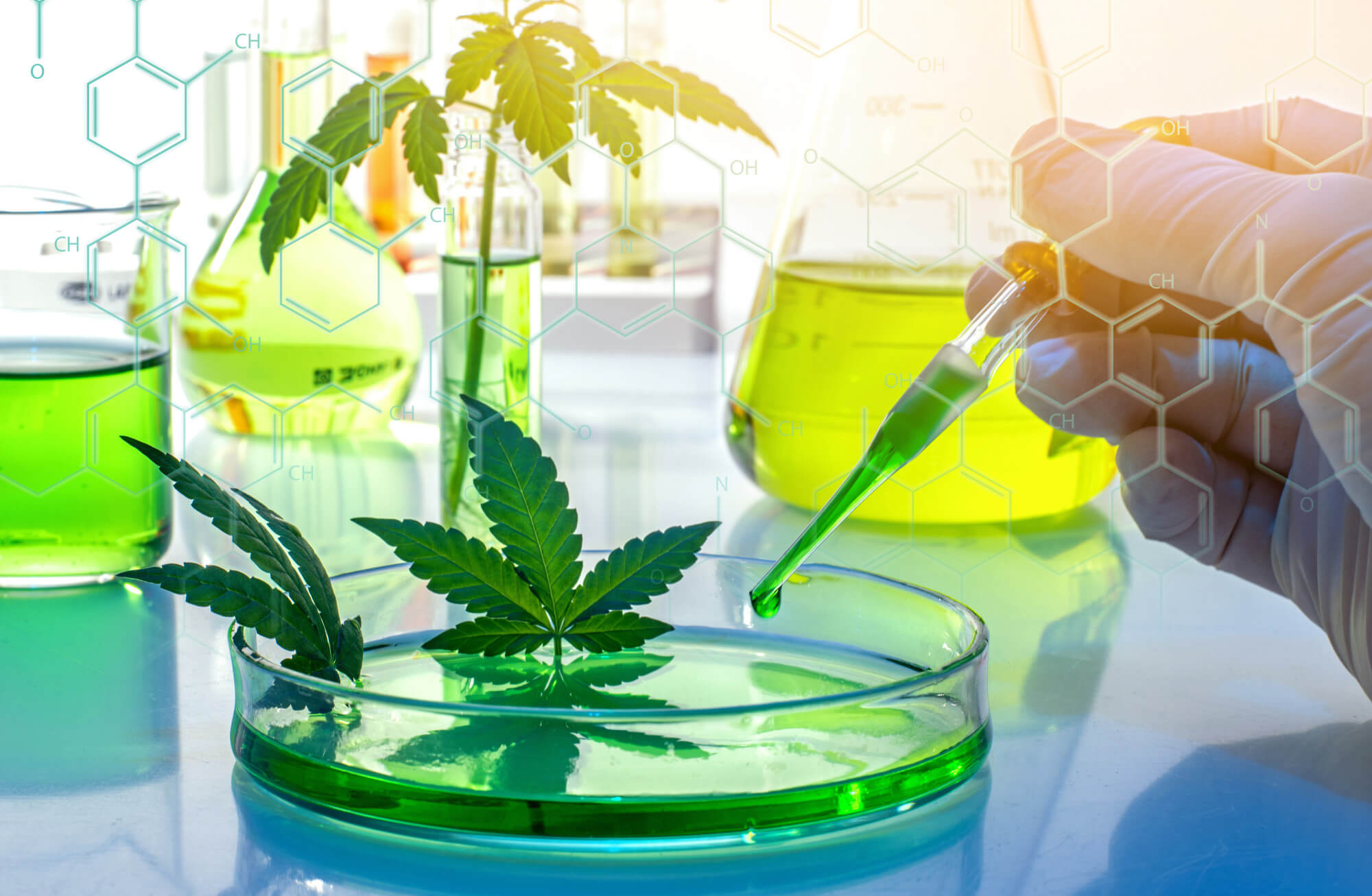 Study Up: What Is the Importance of Cannabis Testing?