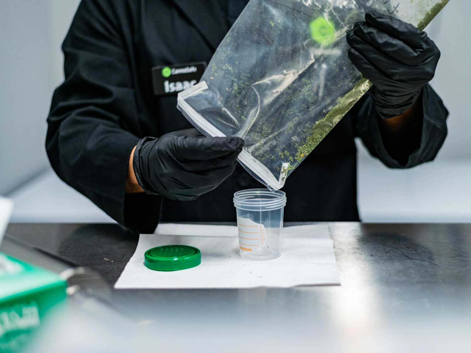 Cannabis in a lab bag
