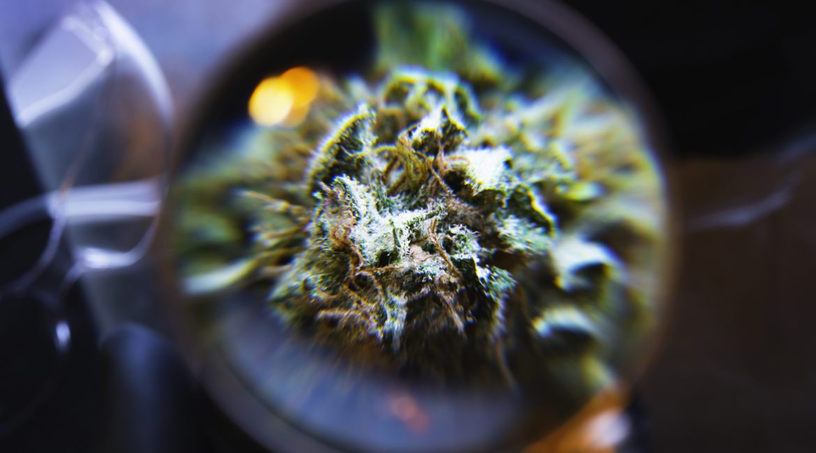 Microscopic view of cannabis flower and cannabinoids at CannaSafe