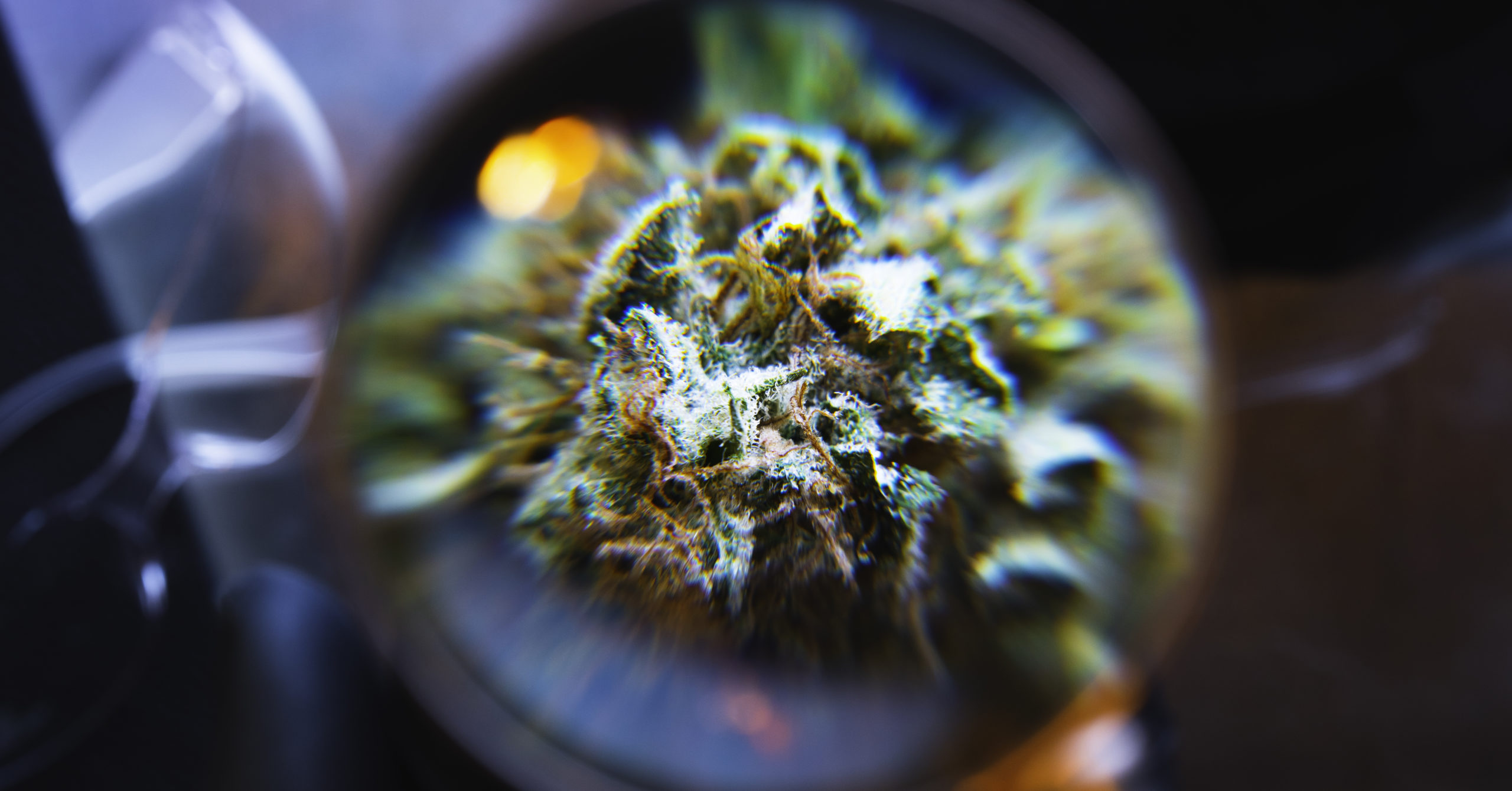 magnifying glass to look at your cannabis hemp flowers trichromes
