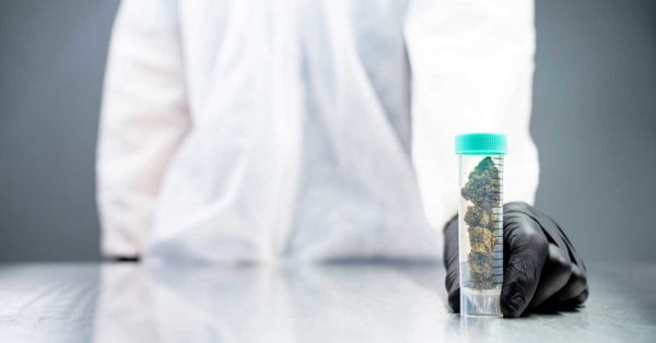 Person in Lab Coat Holding Clear Vial filled with Safe Cannabis