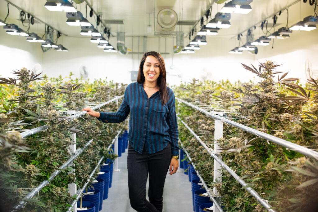 One of the Ways to Grow Cannabis - A Cannabis Farm Indoors