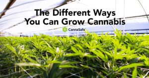 CannaSafe Cannabis Blog Post for Different Ways to Grow Cannabis