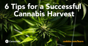 6tipsforsuccessfulharvest