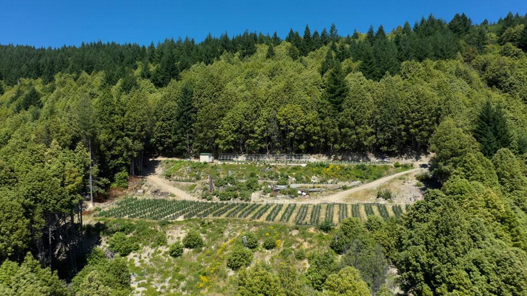 cannabis grow outdoor drone
